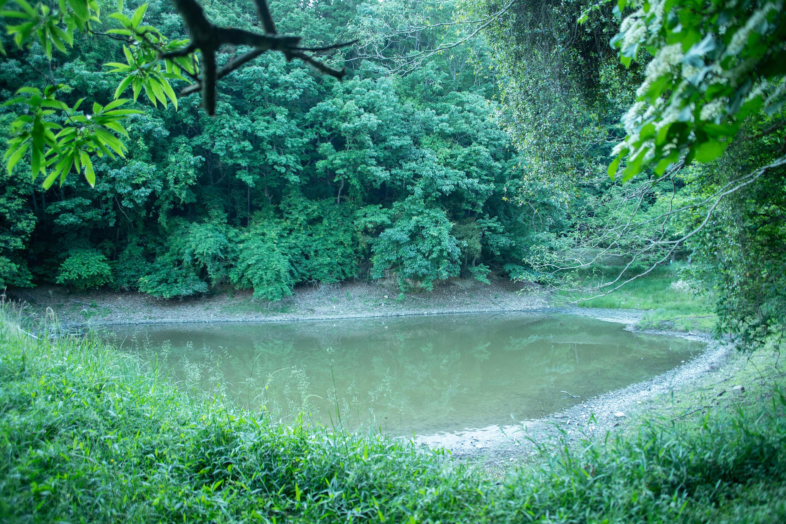 夏休みのある日、ため池で写生をしていて学んだこと